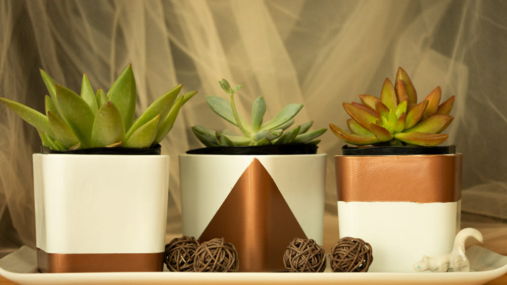 To show DIY succulent containers