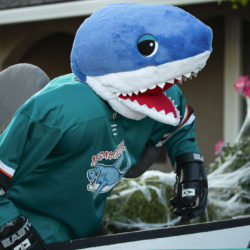 Megalodonnie (ancestor of SJ Sharkie) leans over the boards to cheer on his team during the Halloween hockey game.