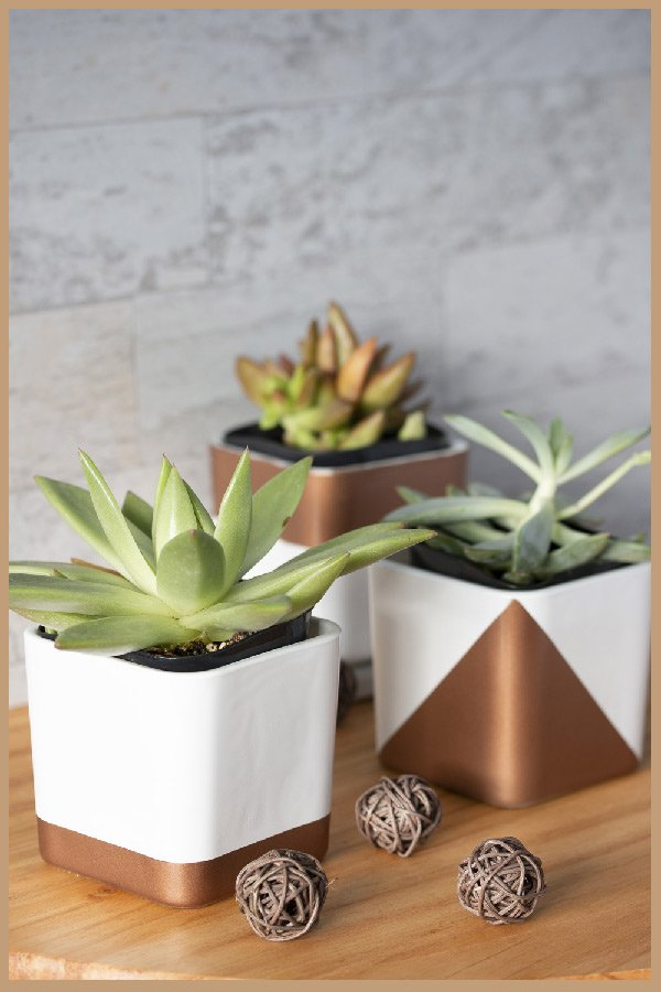 White and copper succulent pots made from glass dollar store candleholders containing succulents.