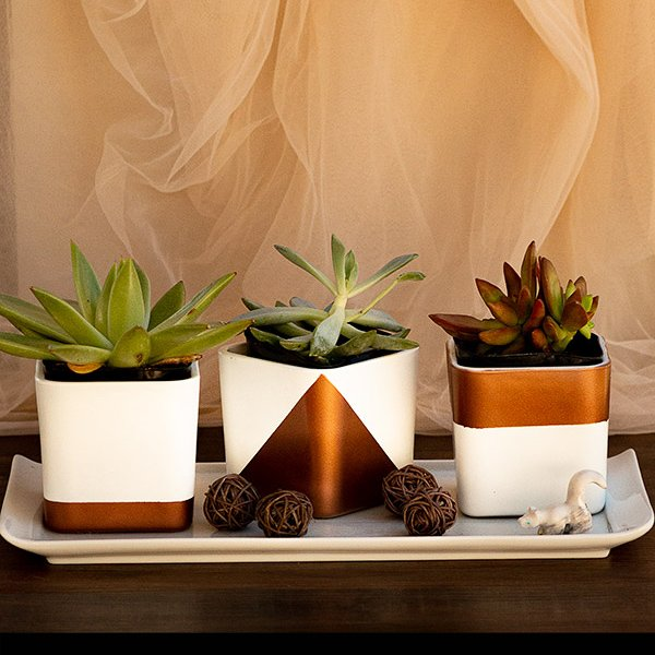 Adorable, modern succulent pots made from glass candleholders and spray paint sitting on a ceramic tray