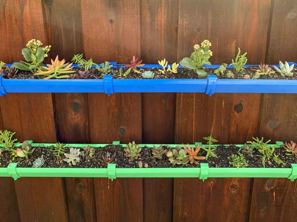 Two level gutter garden, painted green and blue, filled with a variety of small succulents mounted on a fence.