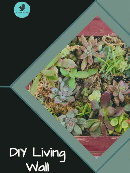 Succulents in a picture frame forming a living wall