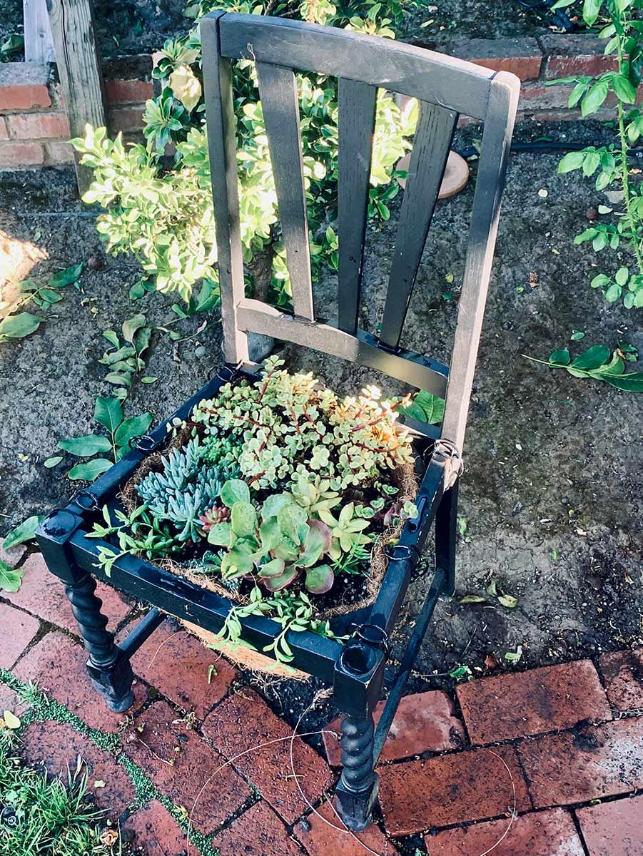 Broken chair converted into a succulent garden.