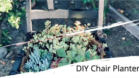 Succulents in a variety of shapes and colors in a chair planter.