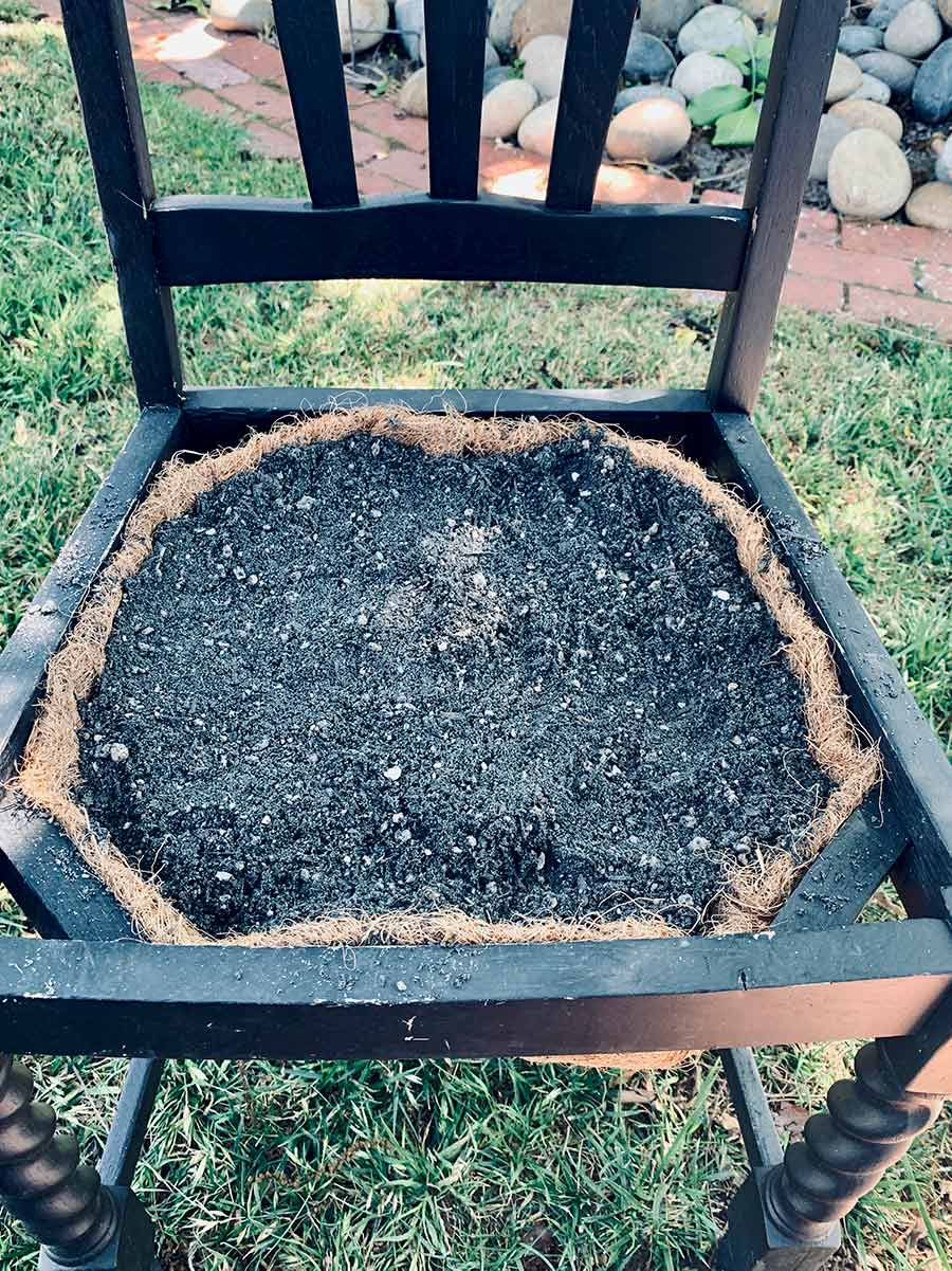 Old chair with seat replaced by a coco liner filled with potting soil.
